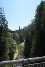 Vue du milieu du pont sur le Capilano Canyon