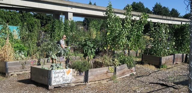 jardinière urbaine Vancouver